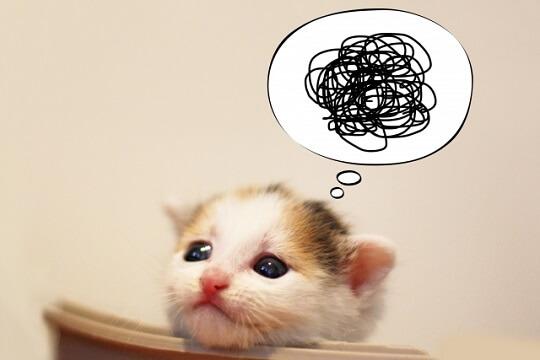 興味なさそうな表情をしているネコ